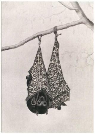 postcard bat