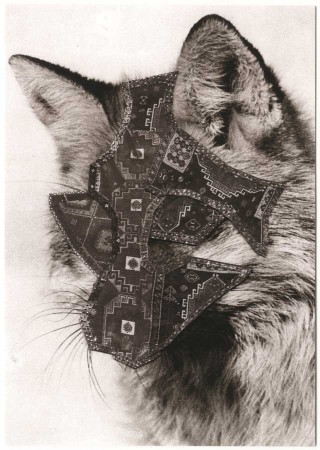scan_postcards_rugs_fox_900