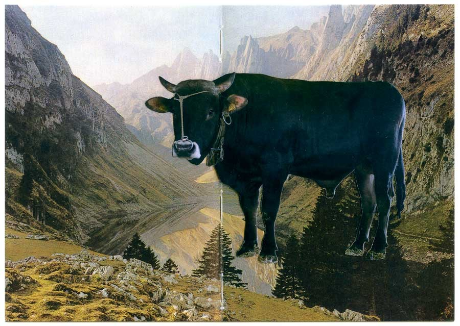 postcard swiss bull