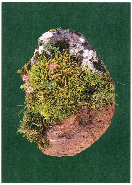 postcard swiss stone greens