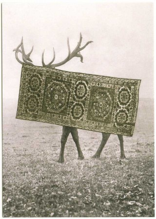 postcard antler deer