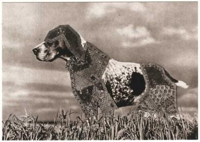 postcard dog