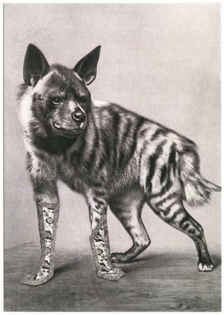 postcard hyena