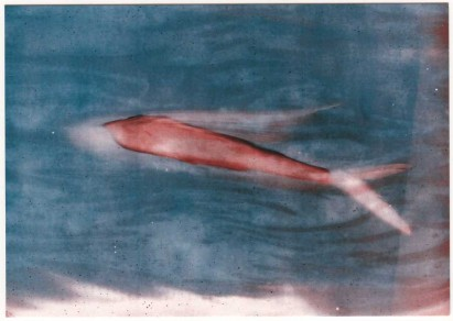 postcard flying fish